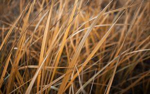 Dry Grass Wallpaper Background