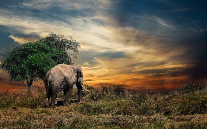 elephant 4k wallpaper background