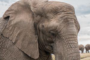 elephant wallpaper 4k 5k background