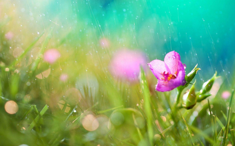 rain showers background summer - photo #9