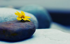 Flower on Stone Wallpaper Background