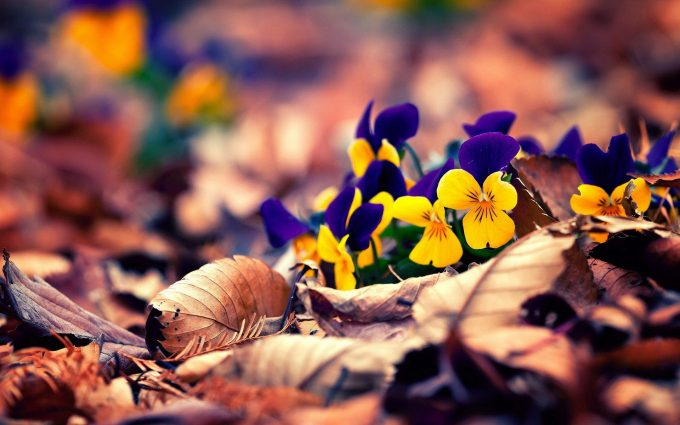 flowers in dry leaves wallpaper