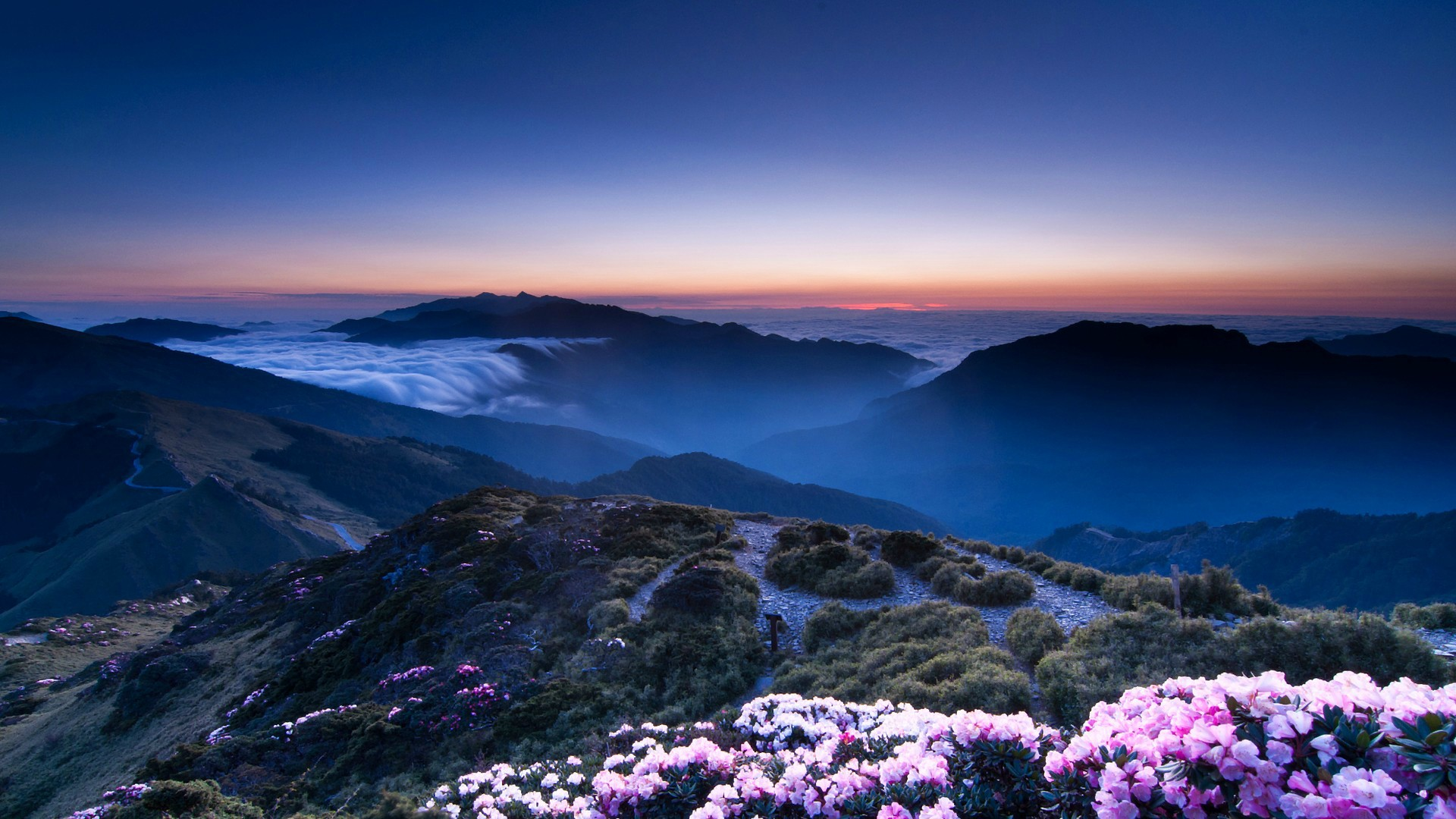 flowers on mountain wallpaper background