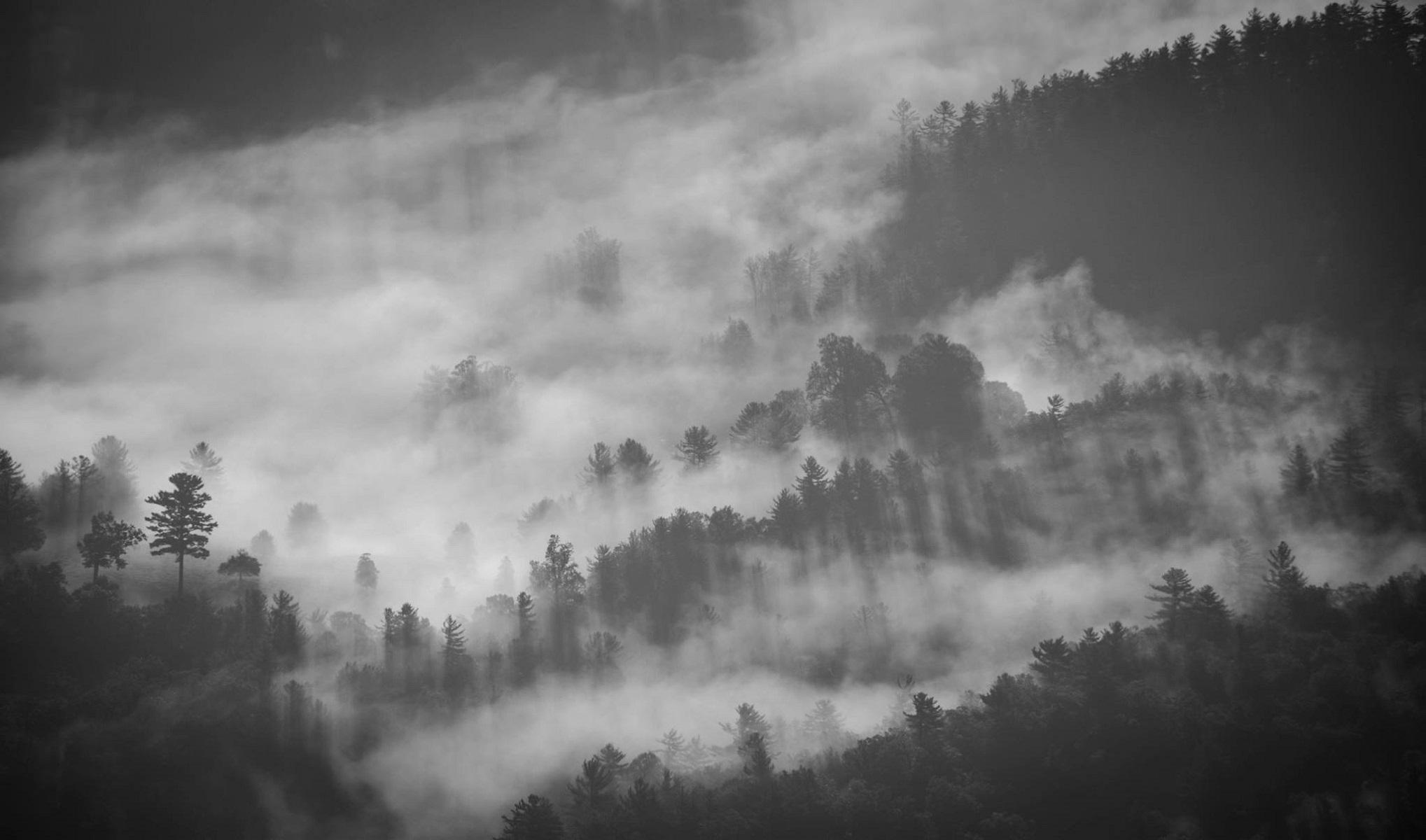 fog in forest wallpaper