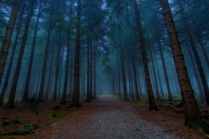 foggy forest wallpaper background