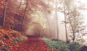 Foggy Forest Wallpaper 4K Background