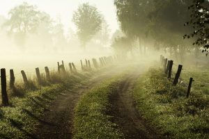 foggy morning wallpaper background