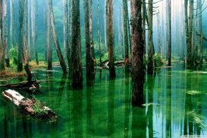 forest green water wallpaper background
