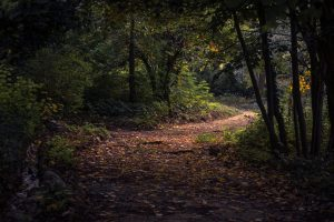 Forest Pathway Wallpaper Background
