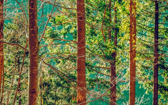 forest, trees, 4k hd, widescreen, wallpaper