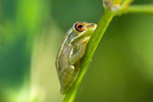 frog close up 4k wallpaper