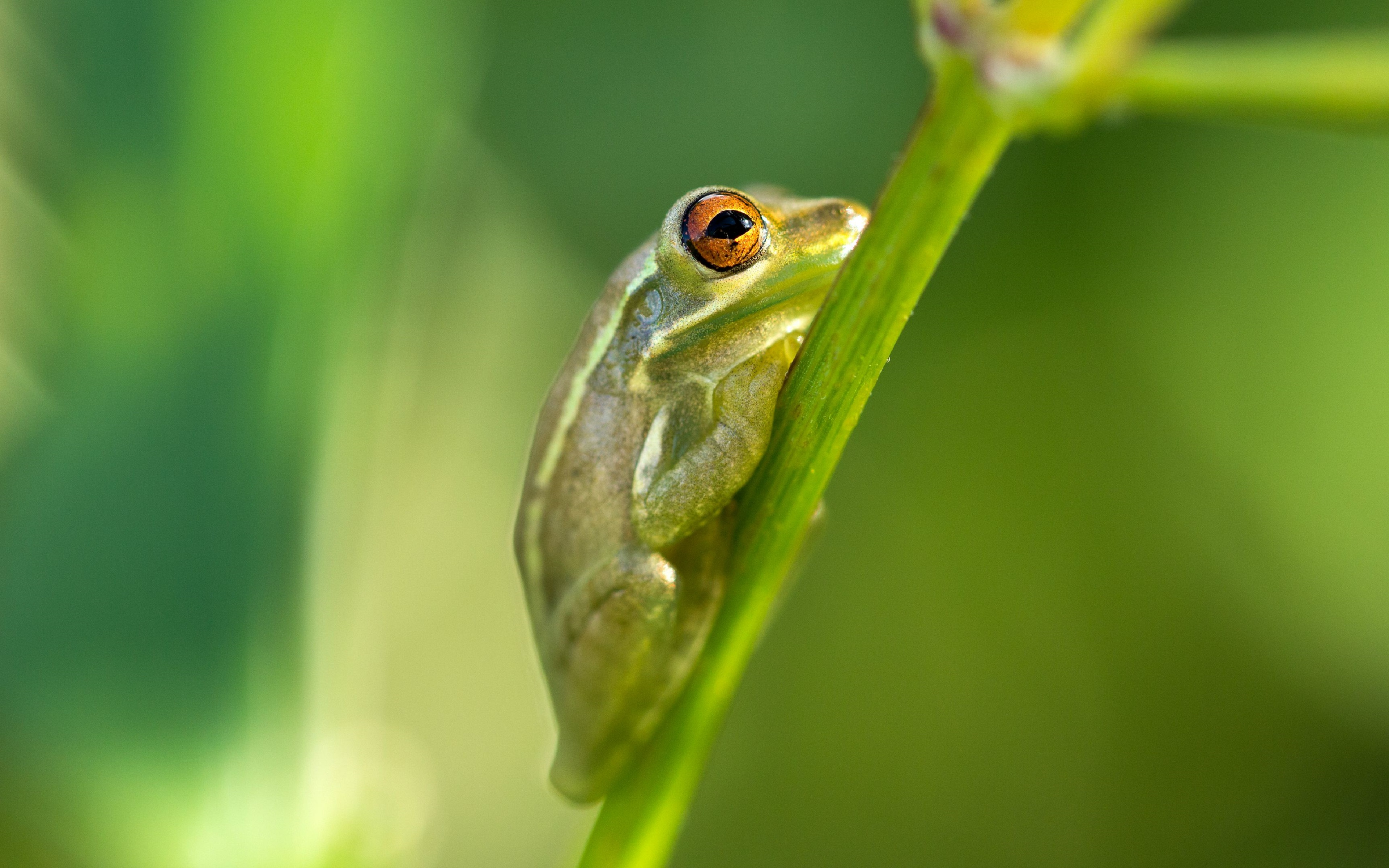 frog close up 4k wallpaper