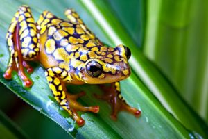 frog on leaf wallpaper background
