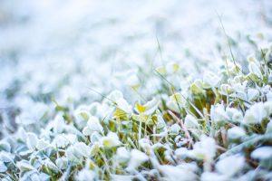 Frozen Grass Wallpaper 4K