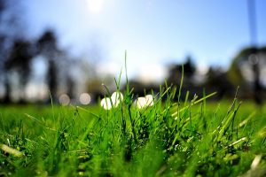 grass close up wallpaper background