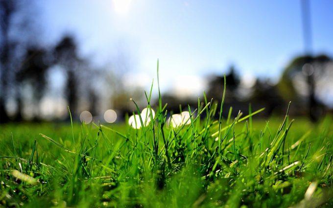 grass close up wallpaper background