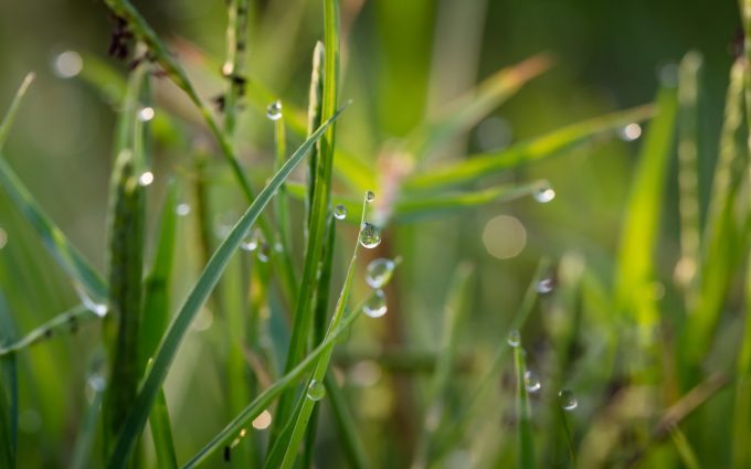 grass with water drops wallpaper background
