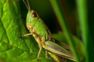grasshopper wallpaper background, wallpapers
