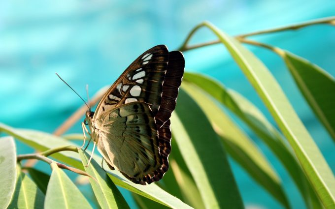 green and brown butterfly wallpaper 4k background