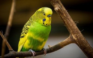 Green and Yellow Parrot Wallpaper