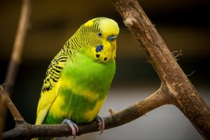 green and yellow parrot wallpaper background