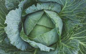 Green Cabbage Wallpaper