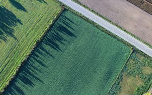 Green Field Aerial View Wallpaper