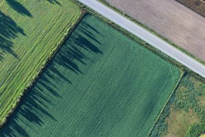 green field aerial view wallpaper background