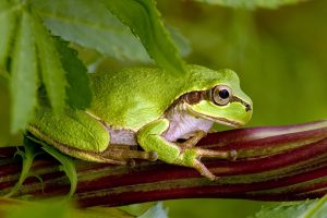 green frog wallpaper background