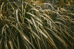 Green Grass 5K Wallpaper