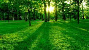 Green Grass HD Wallpaper