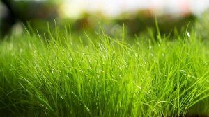 Green Grass Wallpaper Background