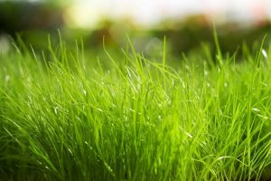 green grass wallpaper background