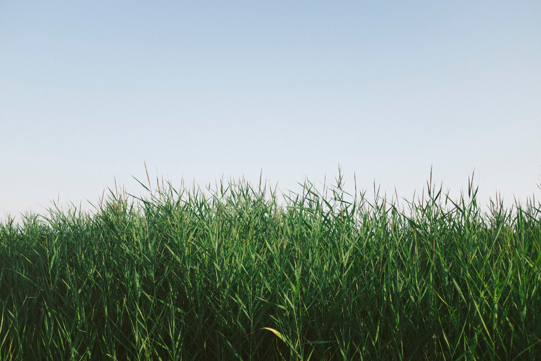 green grass wallpaper 4k background