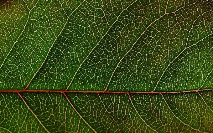 green leaf macro wallpaper background