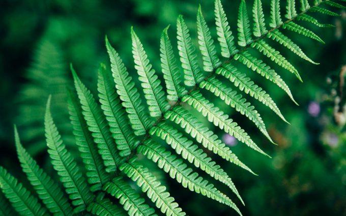 green leaf wallpaper 4k 5k background