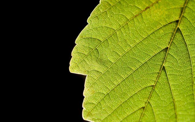 green leaf wallpaper background