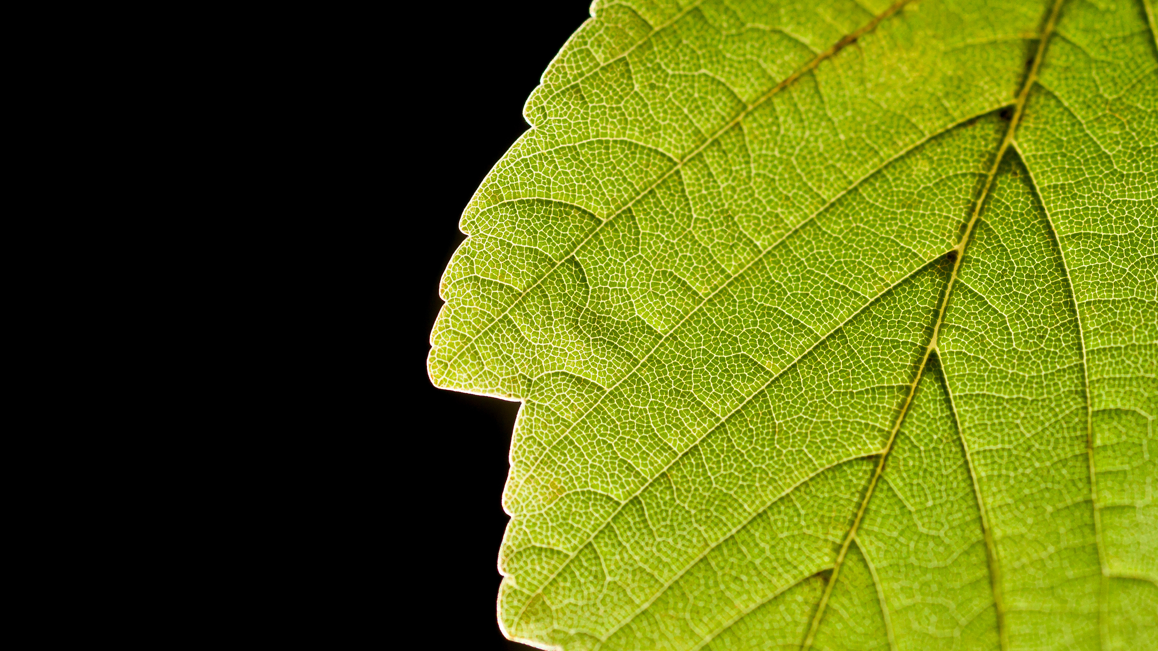green leaf wallpaper background