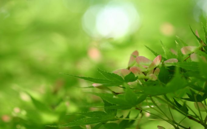 green leaves wallpaper background