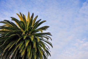Green Palm Tree Wallpaper 4K Background