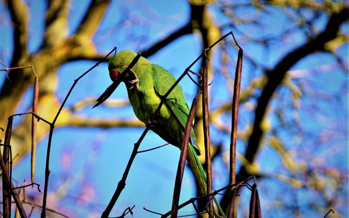 green parrot wallpaper 4k background