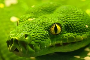 green snake close up wallpaper background