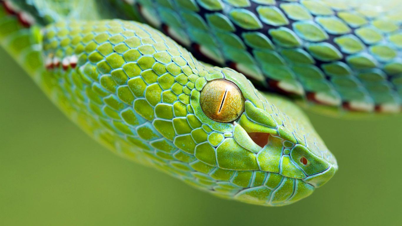 Green snake face wallpaper background hd wallpaper - Green snake hd wallpaper ...