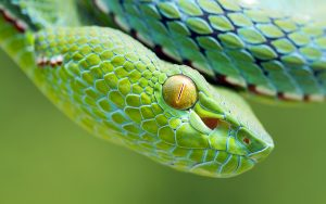 Green Snake Face Wallpaper Background