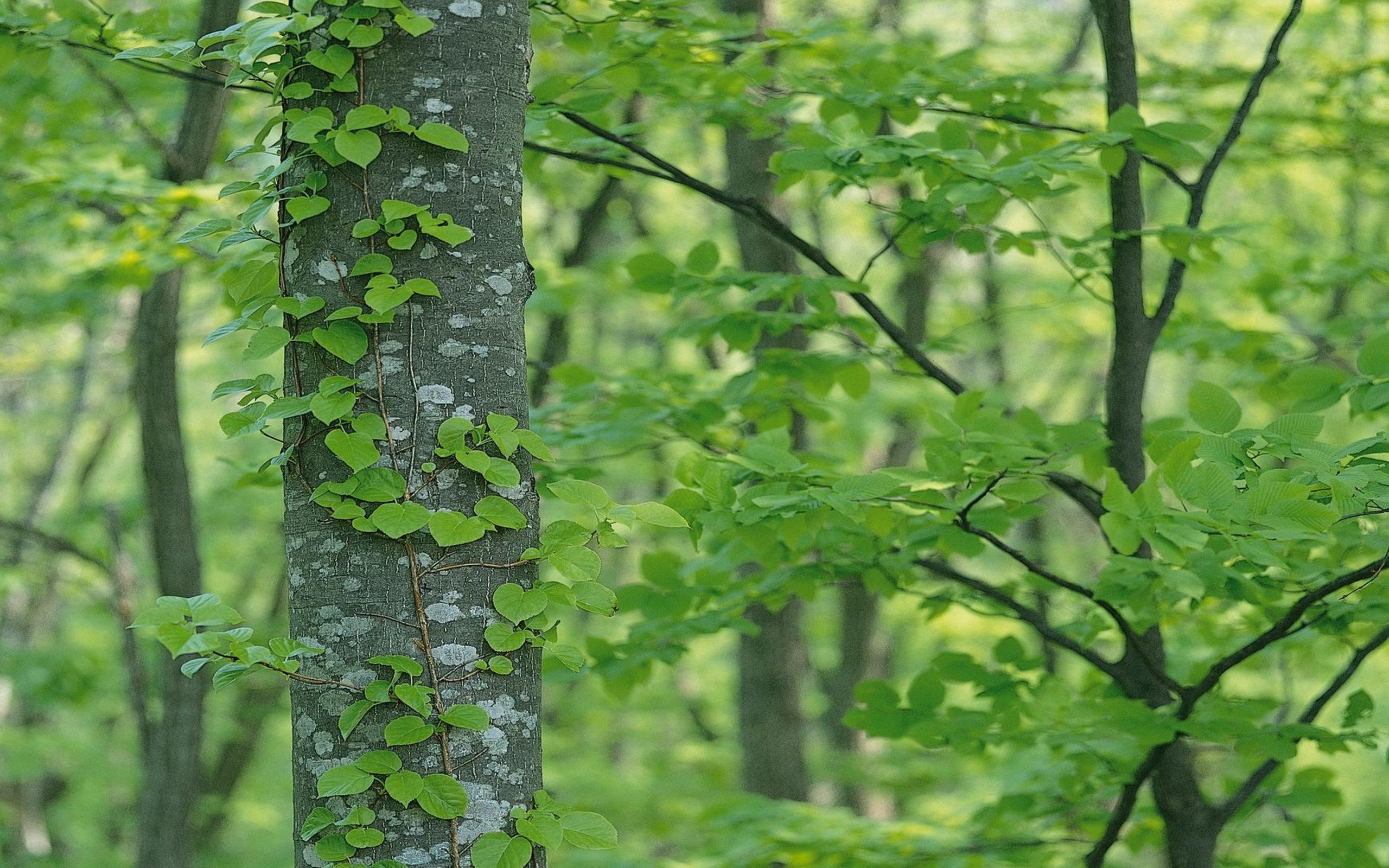 Green Tree Wallpaper 4k Hd Wallpaper Background