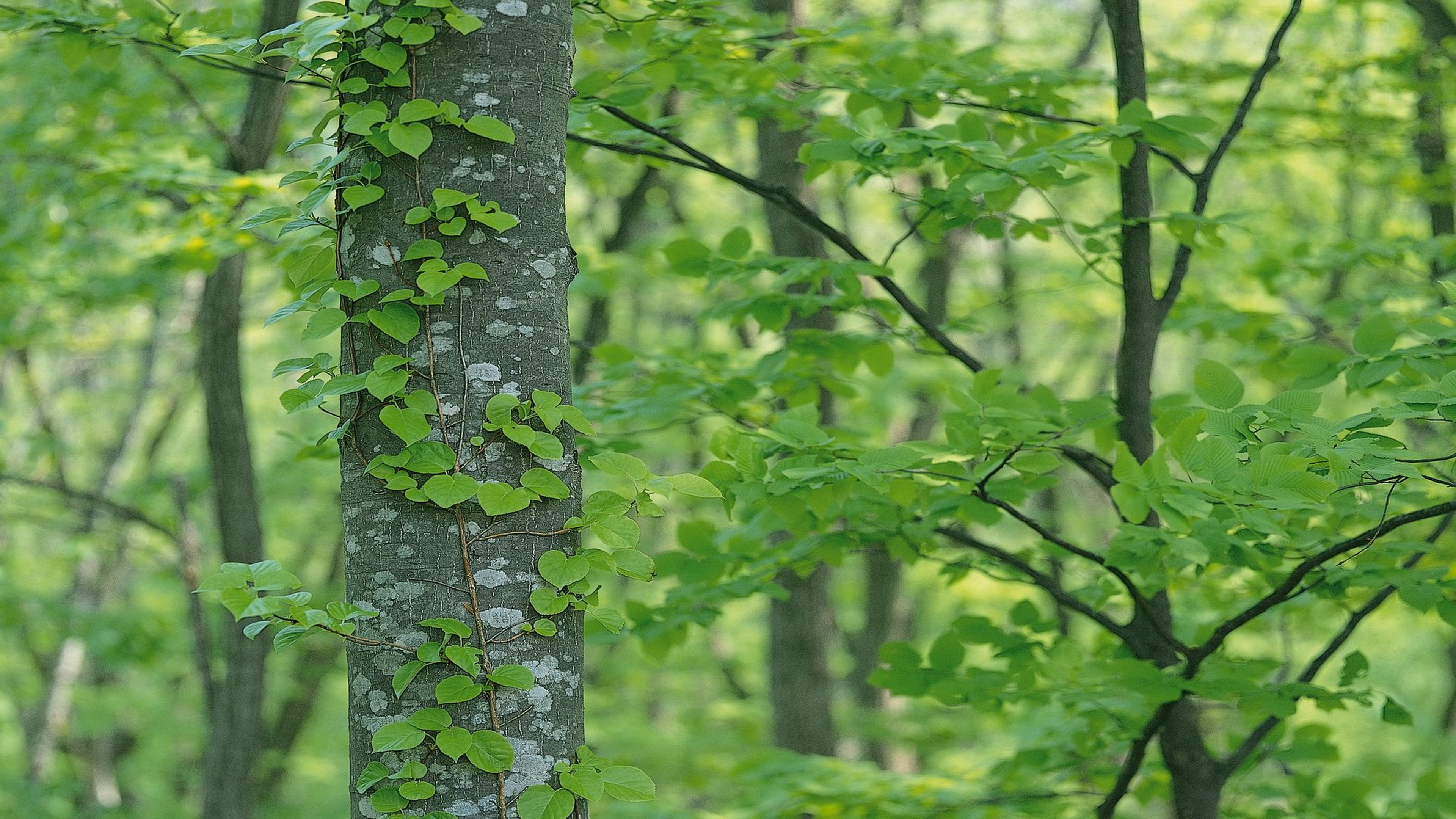 green tree wallpaper 4k background