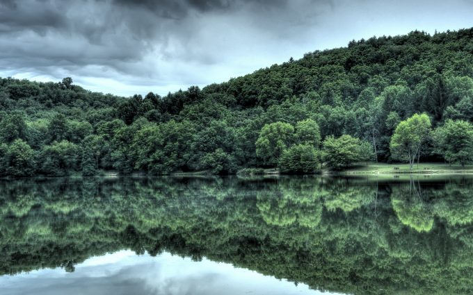 green trees reflection wallpaper background