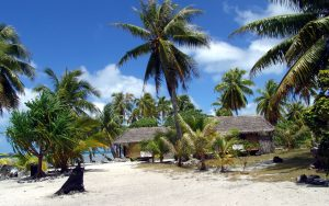 Island Palm Trees Wallpaper
