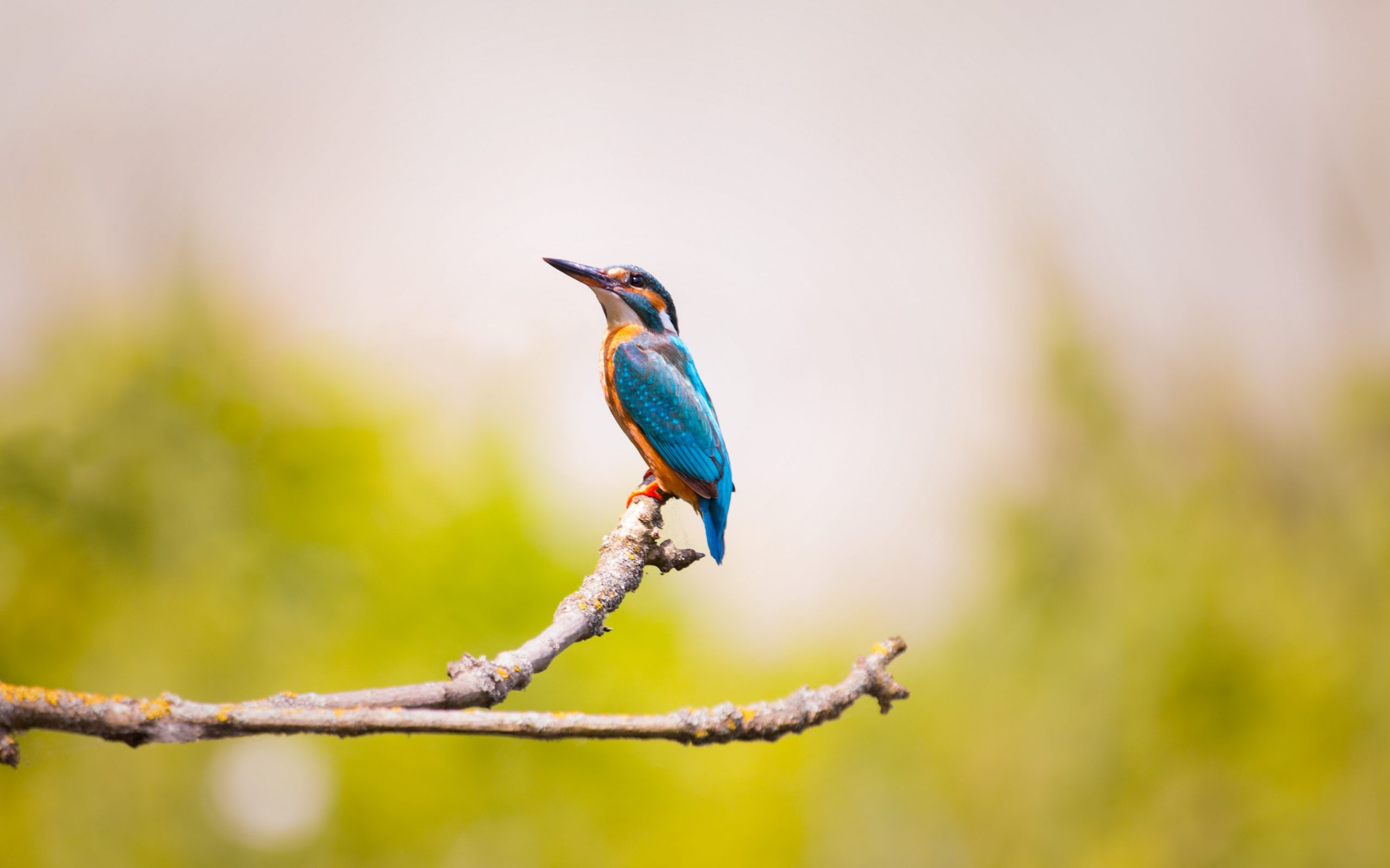 Kingfisher Bird 4k 5k Wallpaper Hd Wallpaper Background
