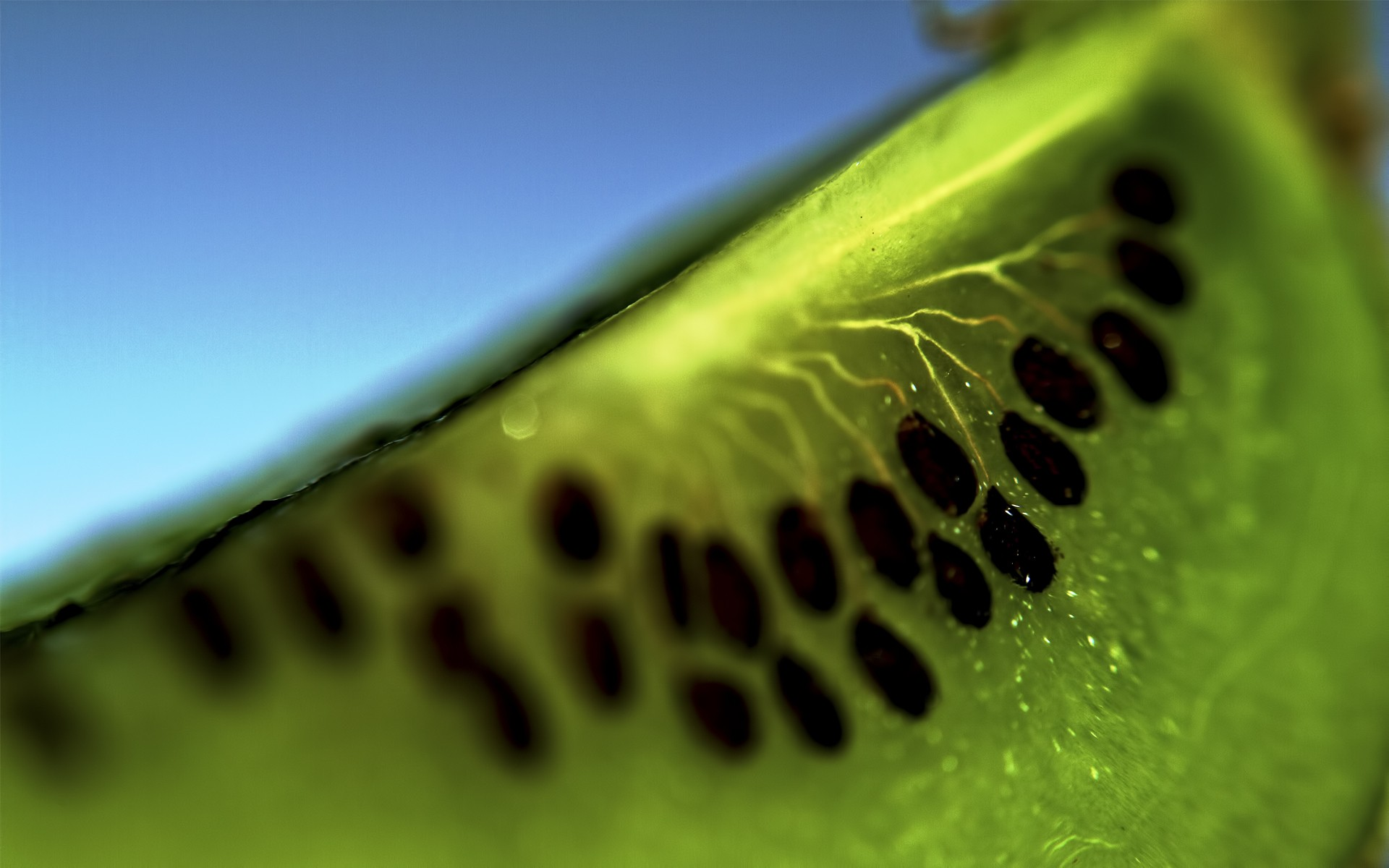 kiwi fruit slice wallpaper background